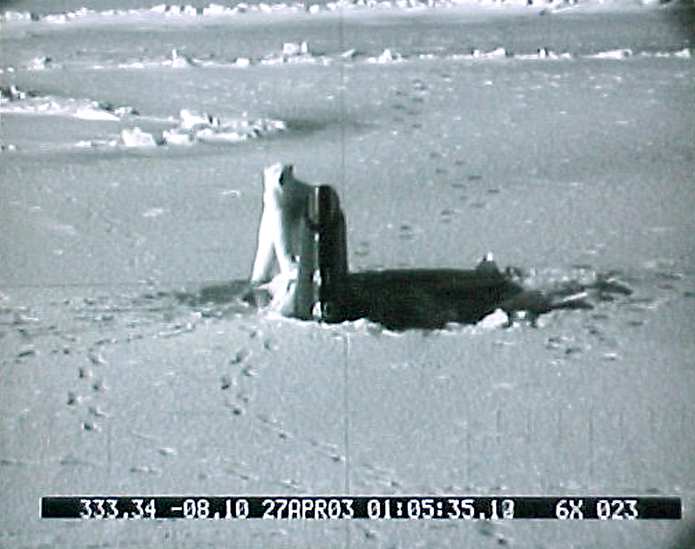 Submarine_Conneticut_Polar_Bear-1