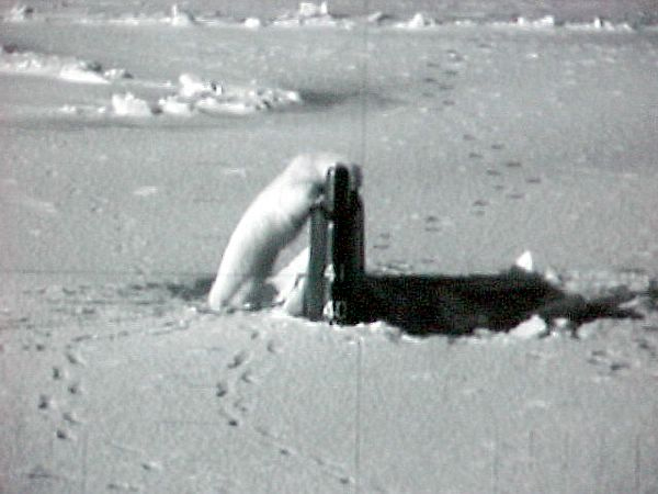 Submarine_Conneticut_Polar_Bear-2